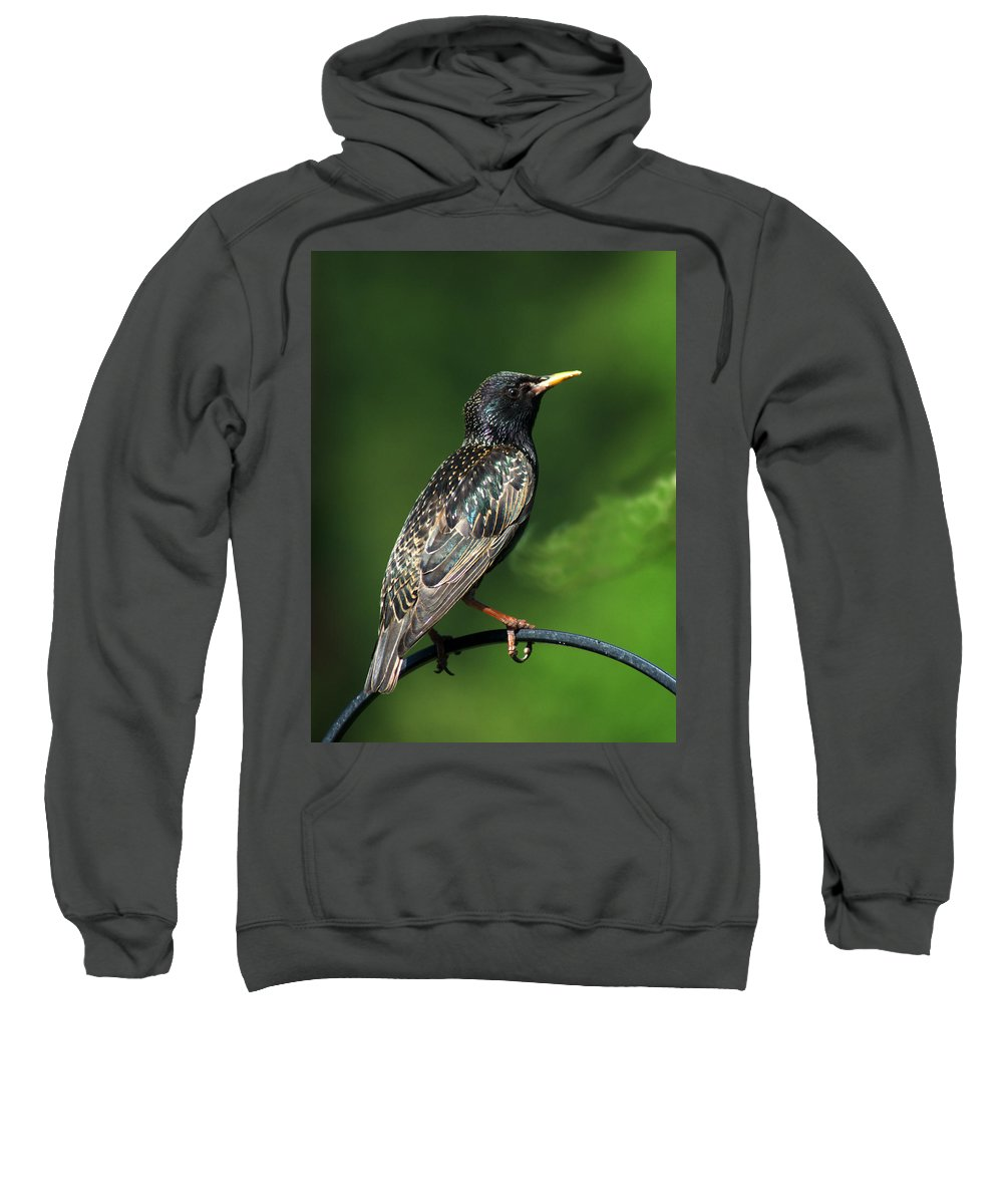 Spotted Starling Sweatshirt featuring the photograph Spotted Starling by Chris Day