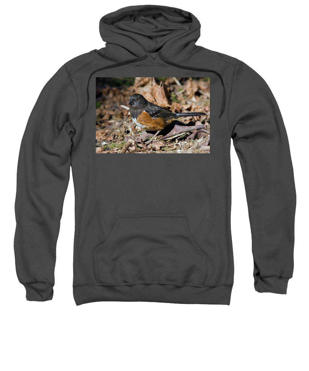 Spotted Towhee Sweatshirt featuring the photograph Spotted Towhee by Randall Ingalls