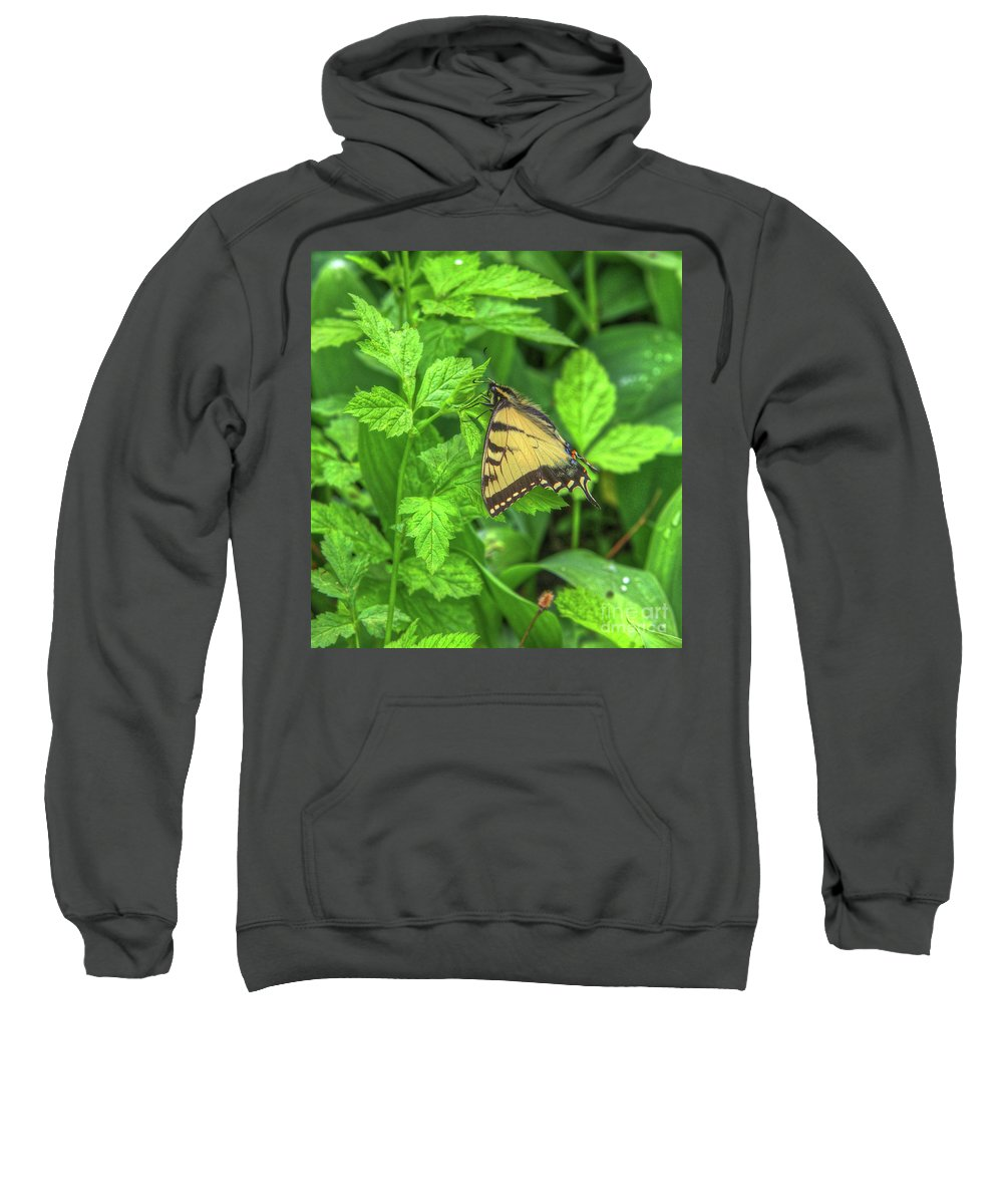 Butterfly Sweatshirt featuring the photograph Spring Butterfly by Robert Pearson