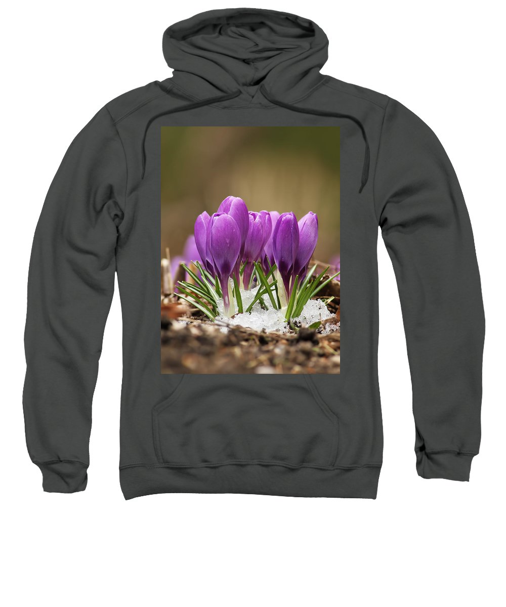 Spring Sweatshirt featuring the photograph Spring Crocus by Mircea Costina Photography