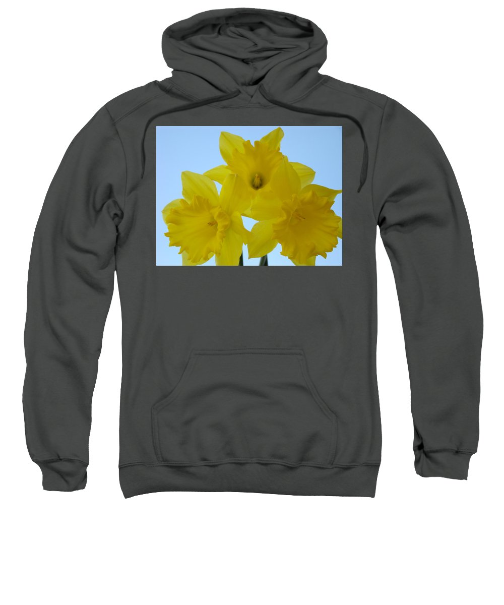 �daffodils Artwork� Sweatshirt featuring the photograph Spring Daffodils 2 Flowers Art Prints Gifts Blue Sky by Baslee Troutman