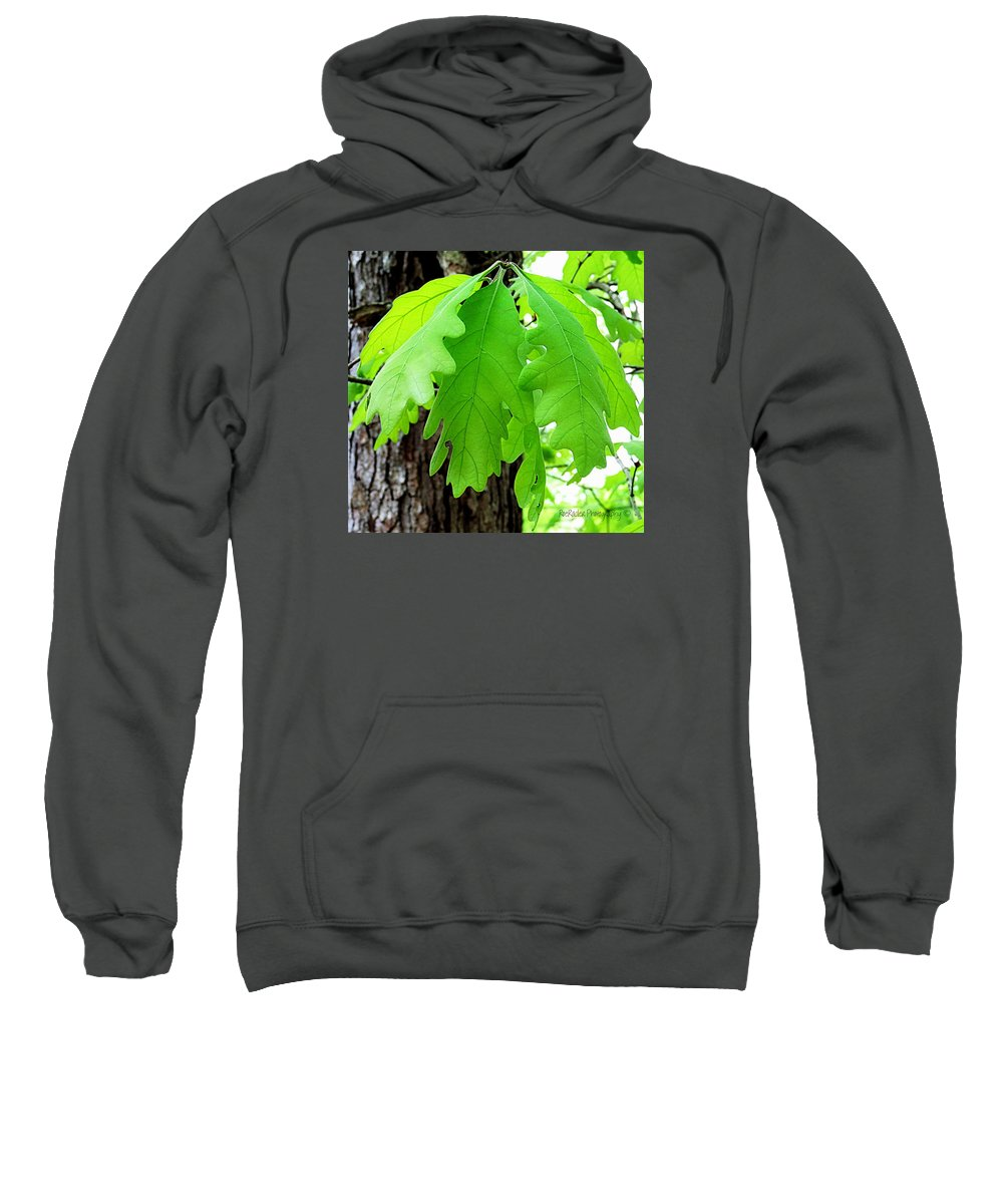 Spring Sweatshirt featuring the photograph Spring Growth by Roe Rader