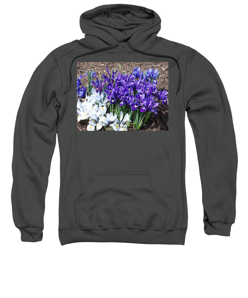 Flowers Sweatshirt featuring the photograph Spring Japanese Iris by Candace Lundin