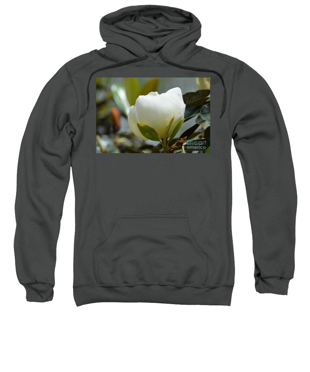 Spring Magnolia Sweatshirt featuring the photograph Spring Magnolia by Maria Urso