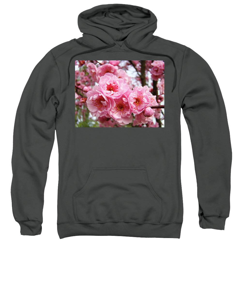 Blossom Sweatshirt featuring the photograph Spring Pink Tree Blossoms Art Prints Baslee Troutman by Baslee Troutman