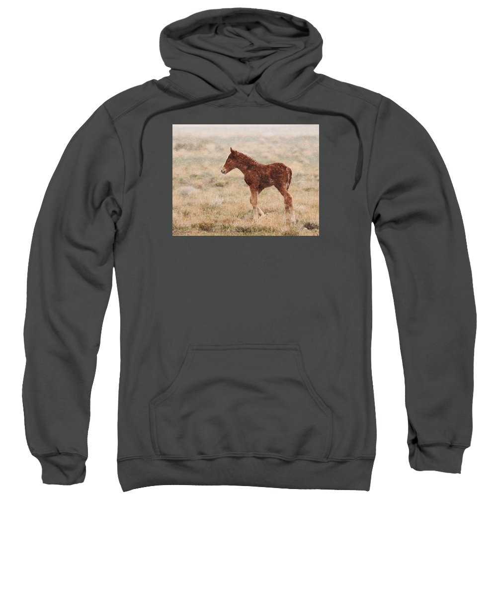 Wild Horse Sweatshirt featuring the photograph Spring Storm Foal by Kent Keller