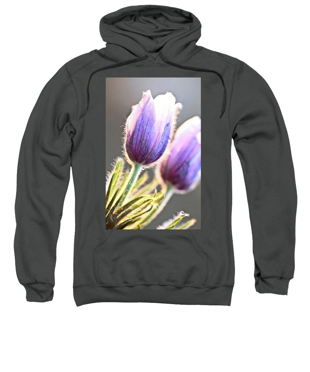 Spring Sweatshirt featuring the digital art Spring Time Crocus Flower by Mark Duffy