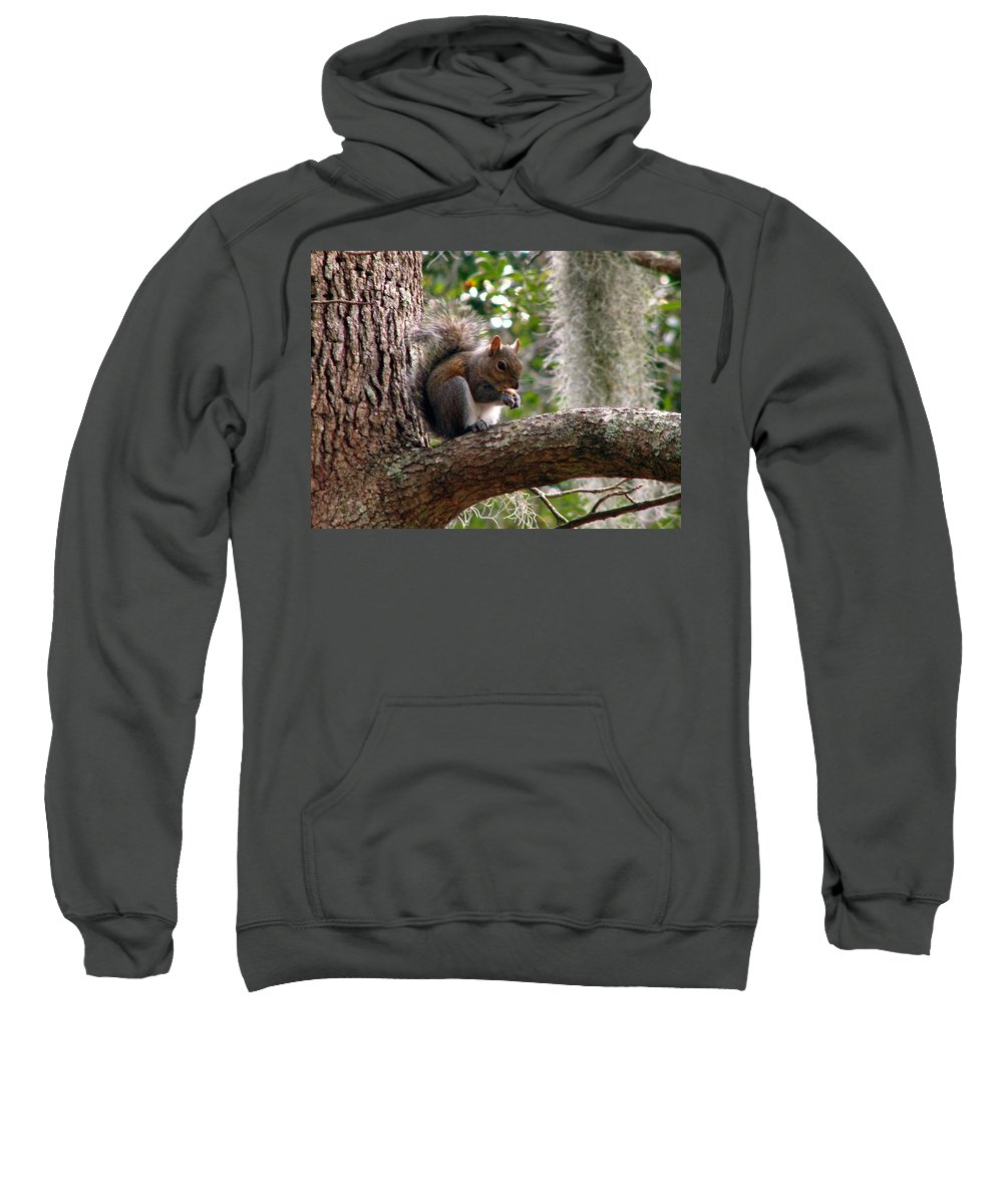 Squirrel Sweatshirt featuring the photograph Squirrel 7 by J M Farris Photography