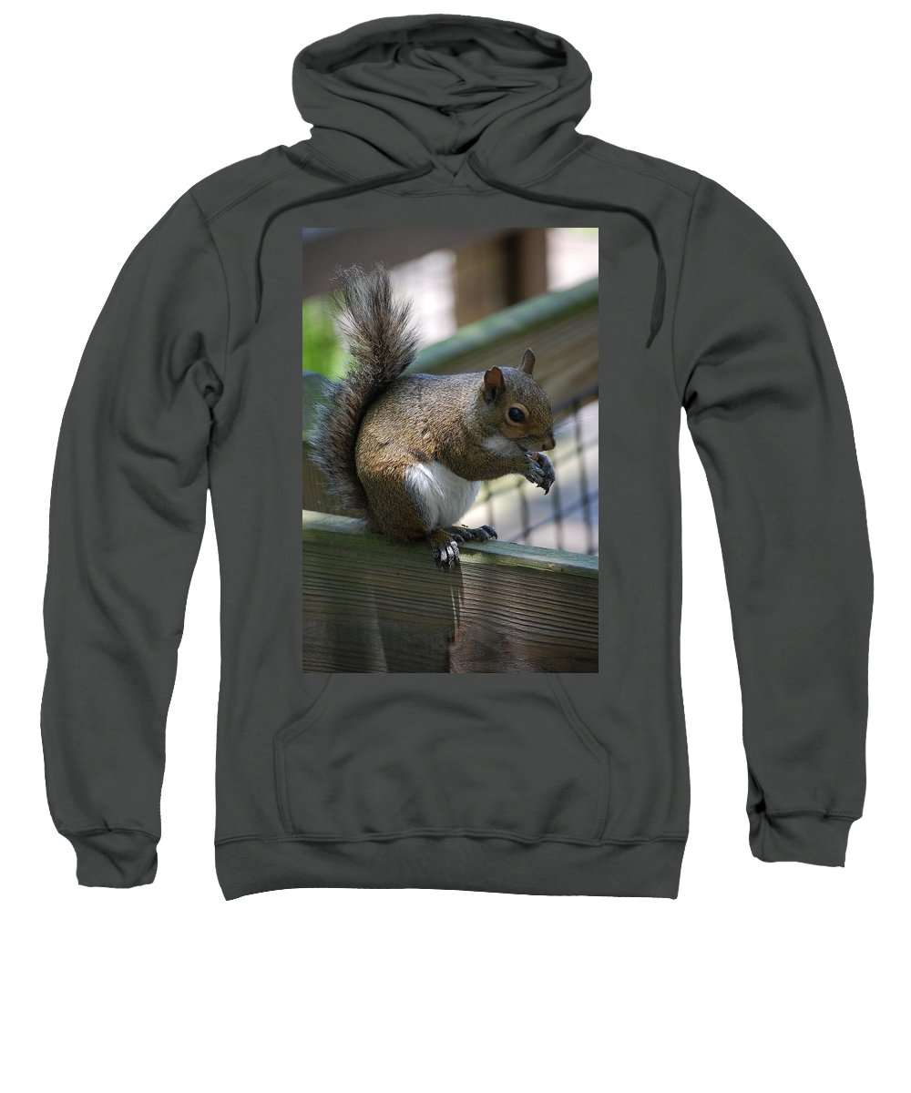 Squirrel Sweatshirt featuring the photograph Squirrel II by Robert Meanor