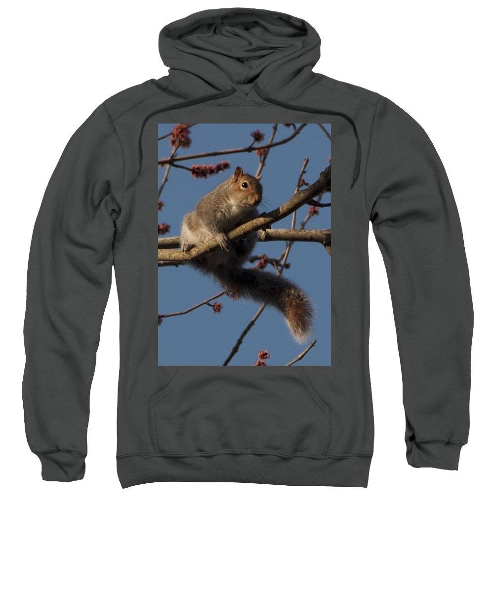 Squirrel Sweatshirt featuring the photograph Squirrel by Steven Natanson