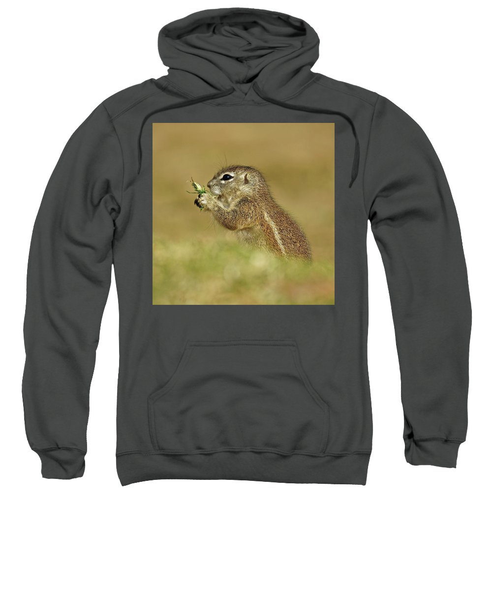 Squirrel Sweatshirt featuring the photograph Squirrel by Suzanne Morshead