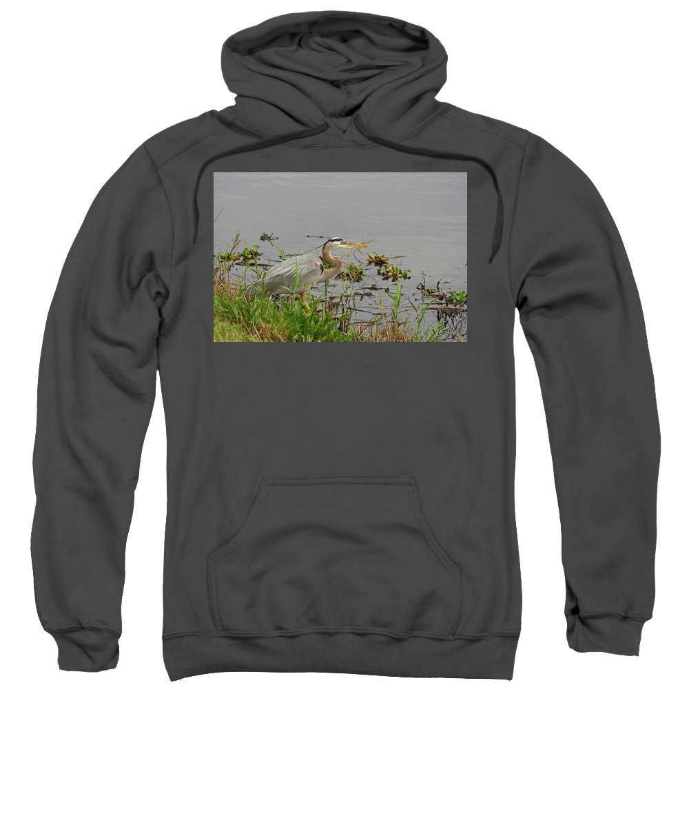 Great Blue Heron Sweatshirt featuring the photograph Standing Guard by Robert Brown