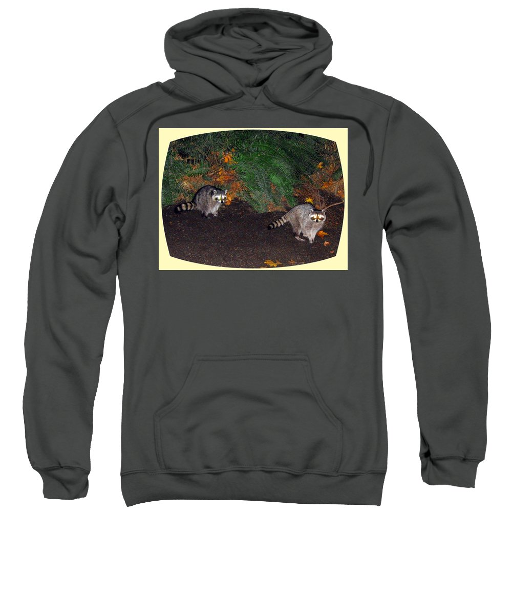 Raccoons Sweatshirt featuring the photograph Stanley Park Rascals by Will Borden