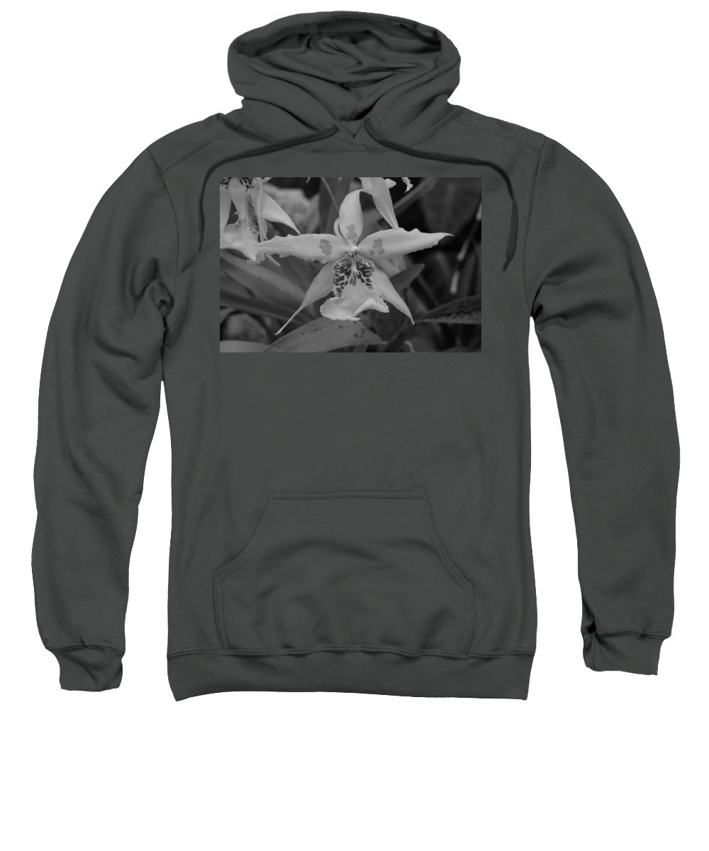 Macro Sweatshirt featuring the photograph Star Flower by Rob Hans