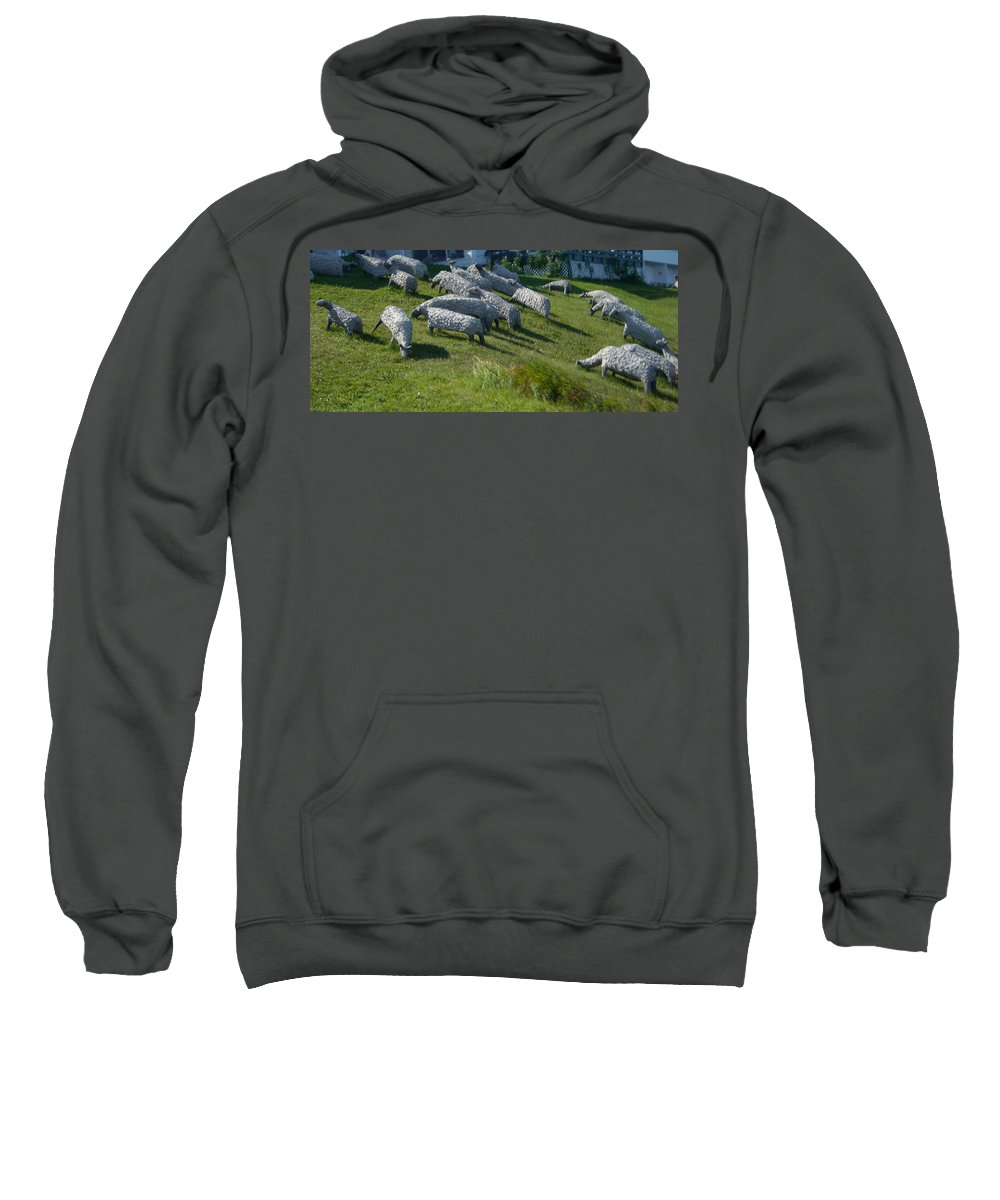 Sheep Sweatshirt featuring the photograph Ste Flavie 002 by Line Gagne