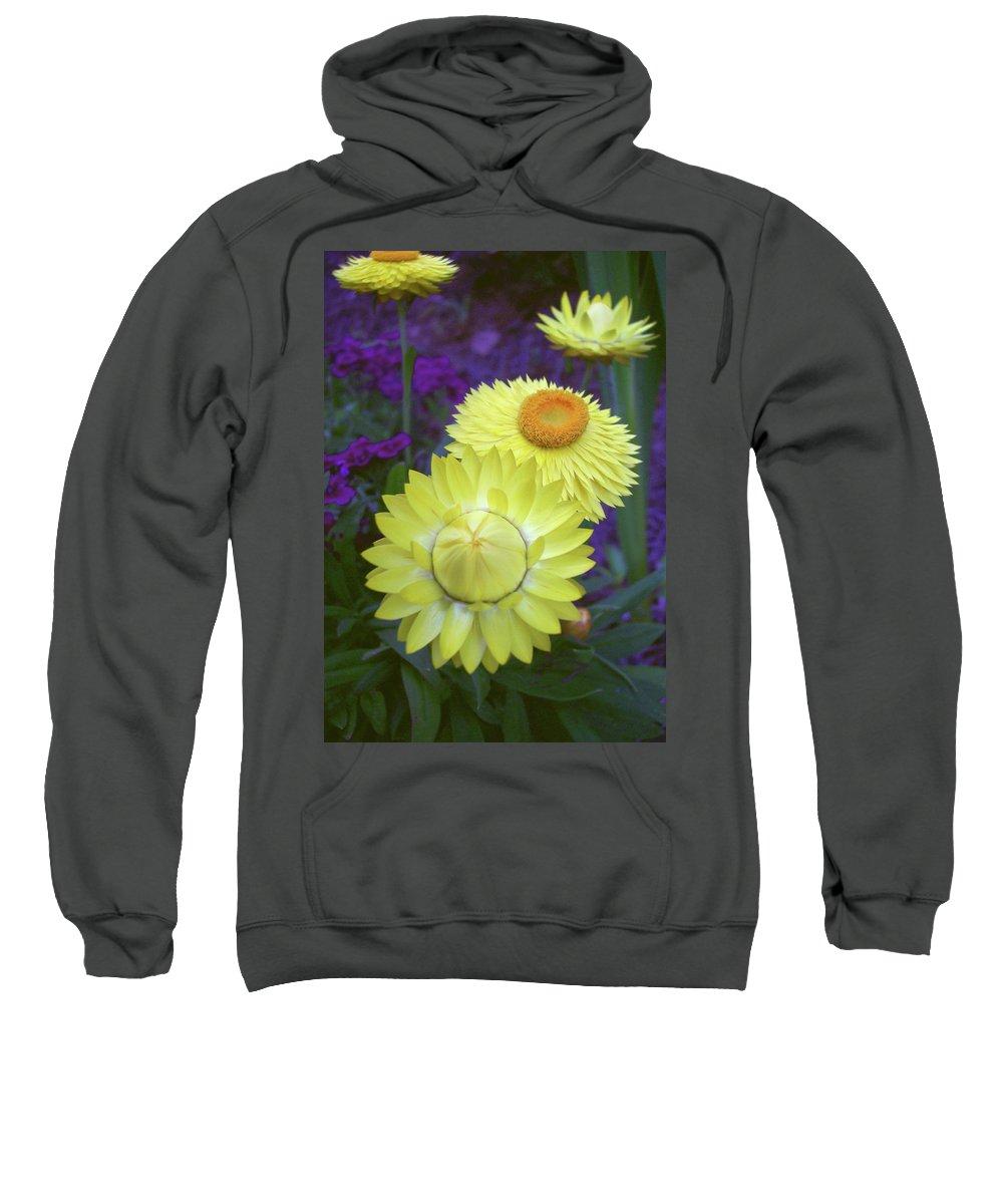 Strawflower Sweatshirt featuring the photograph Strawflower Perfection by Cathy Klopfenstein
