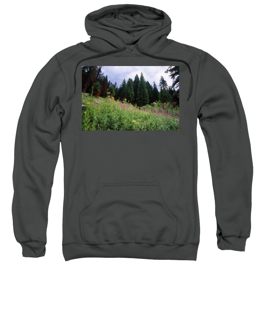 Wildflowers Sweatshirt featuring the photograph Striking Beauty by Soli Deo Gloria Wilderness And Wildlife Photography