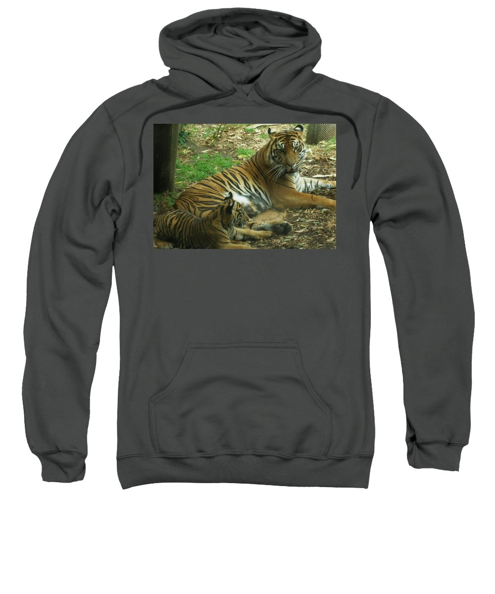 Tiger Sweatshirt featuring the photograph Sumatran Tigers by Travis Day