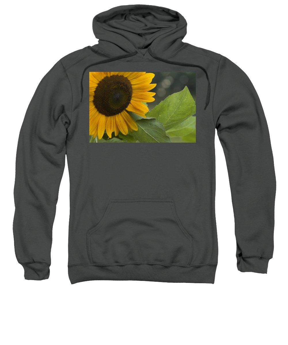 Flower Nature Farm Yellow Bright Sunflower Green Leaf Leaves Close Garden Organic Happy Sweatshirt featuring the photograph Sunflower by Andrei Shliakhau