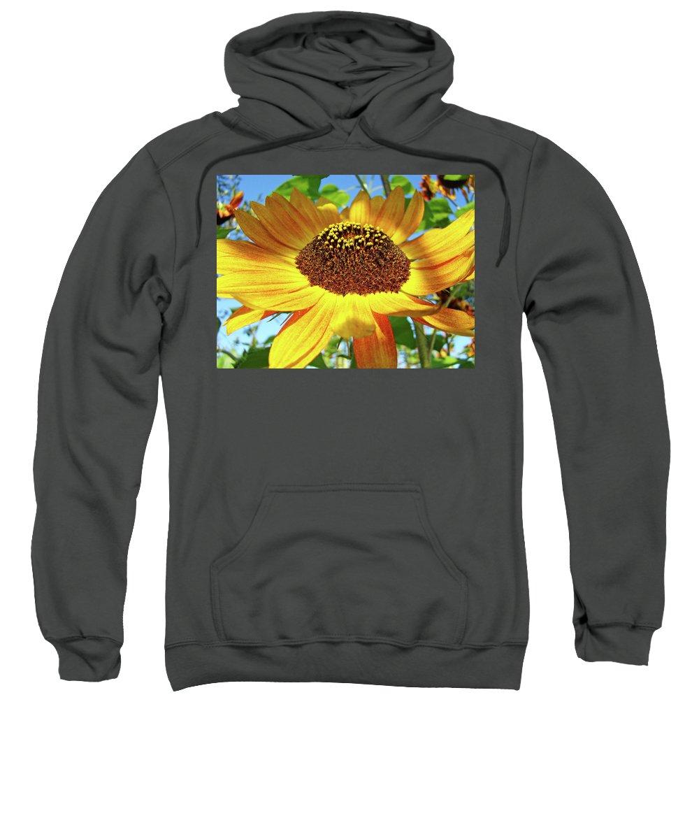 Sunflower Sweatshirt featuring the photograph Sunflower Art Prints Sun Flowers Gilcee Prints Baslee Troutman by Baslee Troutman