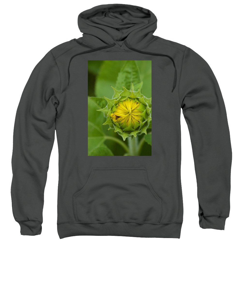 Flower Sweatshirt featuring the photograph Sunflower Bud by Tiffany Erdman