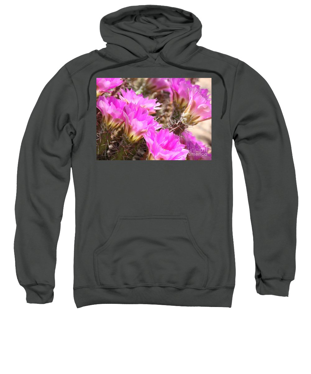 Pink Cactus Flowers Sweatshirt featuring the photograph Sunlight On Pink Cactus Blooms by Carol Groenen