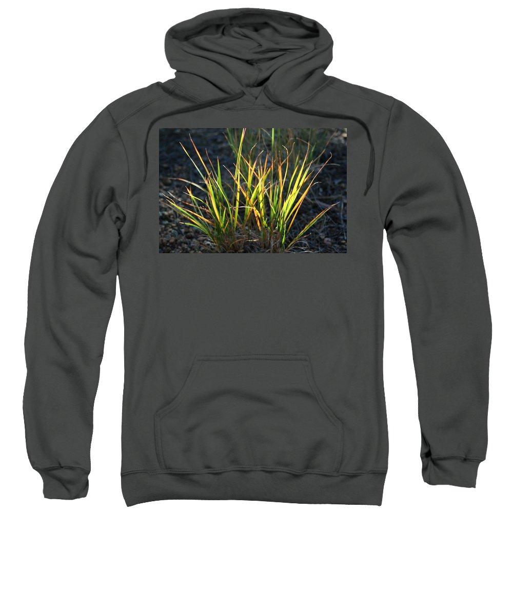 Grass Sweatshirt featuring the photograph Sunlit Grass by Ric Bascobert