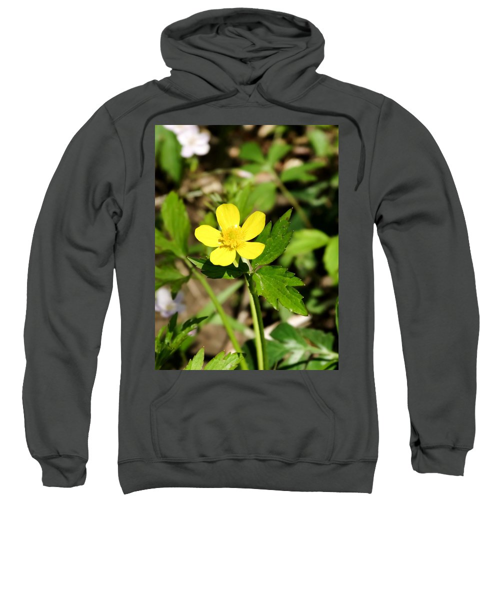 Sunny Yellow Buttercup Sweatshirt featuring the photograph Sunny Yellow Buttercup by Cynthia Woods