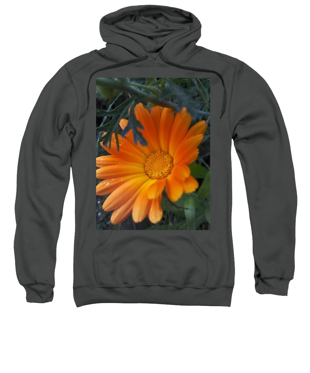 Sunset Sweatshirt featuring the photograph Sunset Daisy by Chase Hoskins