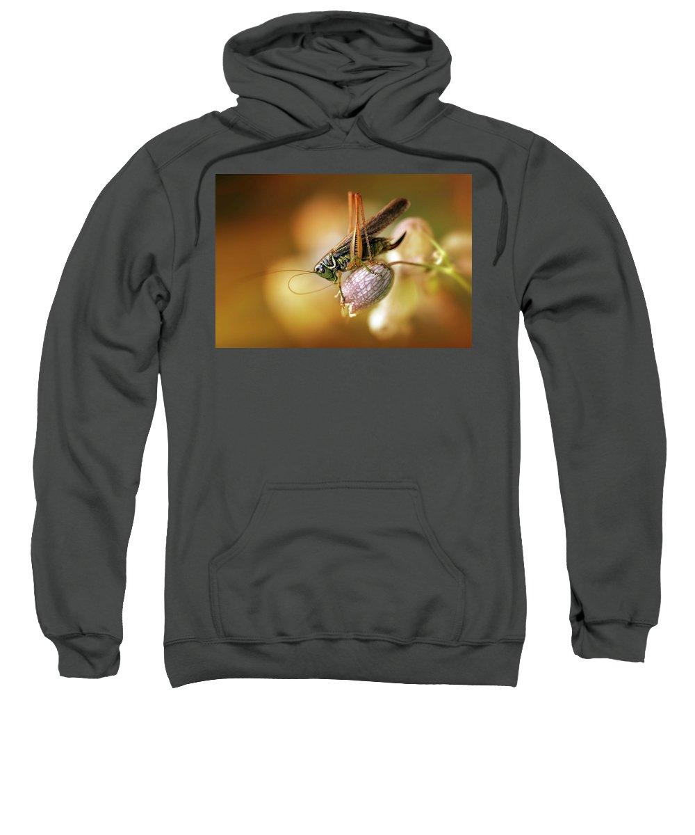 Macro Sweatshirt featuring the photograph Sunset With A Big Grasshoper by Jaroslaw Blaminsky