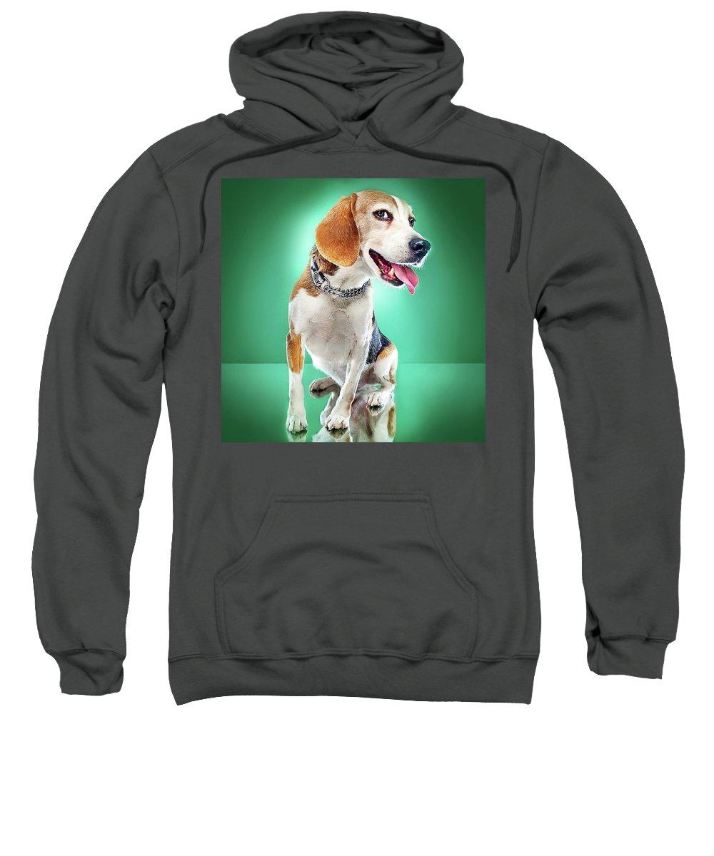 Pets Sweatshirt featuring the photograph Super Pets Series 1 - Super Buckley by Arturo Parada