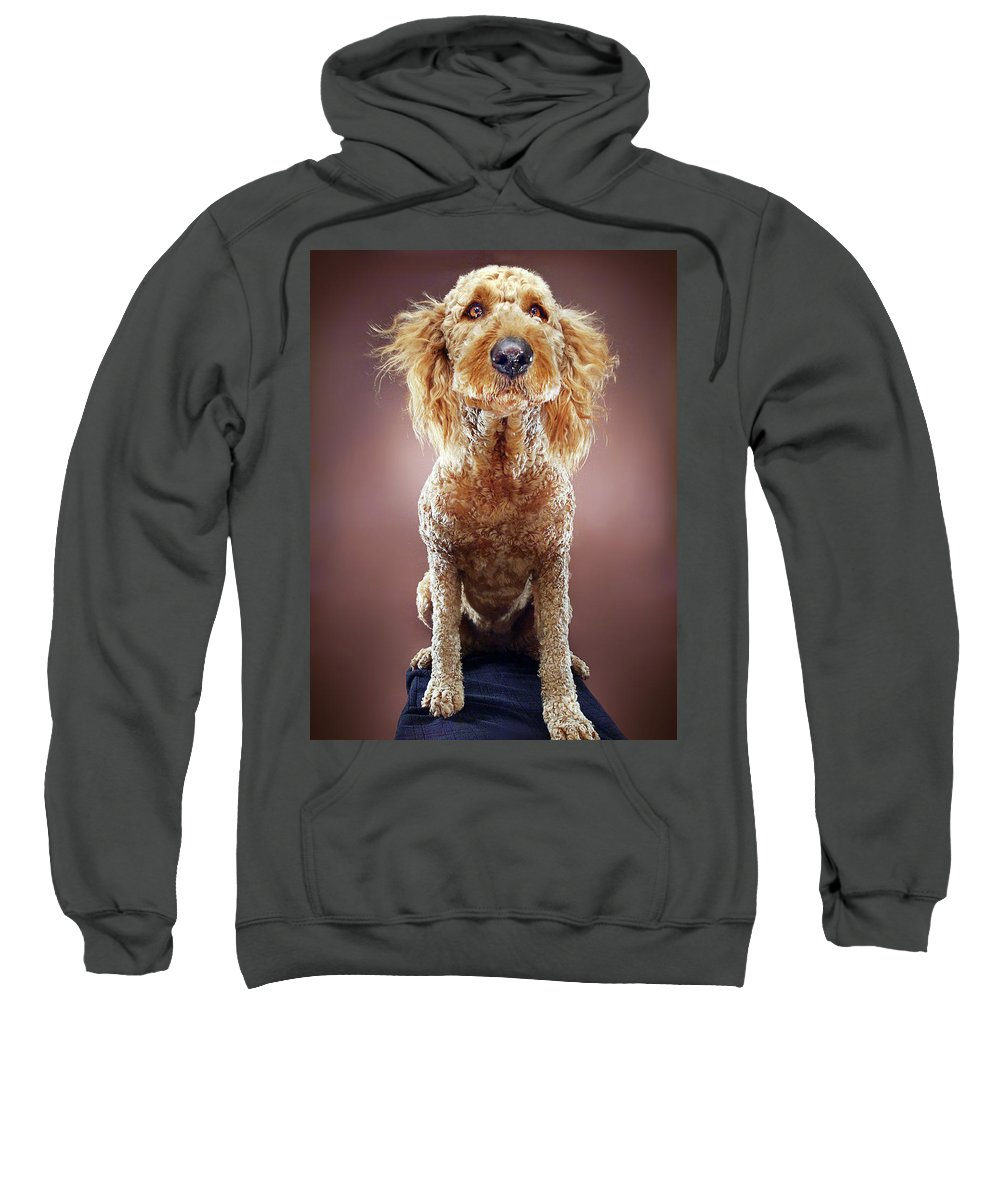 Pets Sweatshirt featuring the photograph Super Pets Series 1 - Super Misiu by Arturo Parada