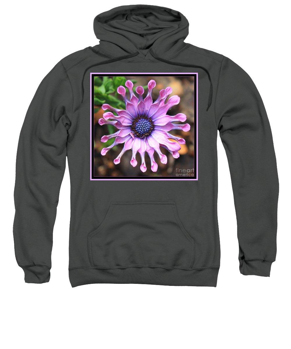 African Daisy Sweatshirt featuring the photograph Superstar by Carol Groenen