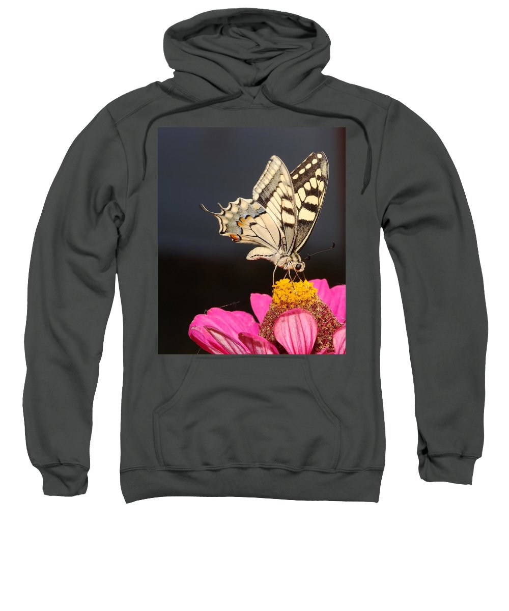 Swallowtail Sweatshirt featuring the photograph Swallowtail On Pink Flower by Cliff Norton