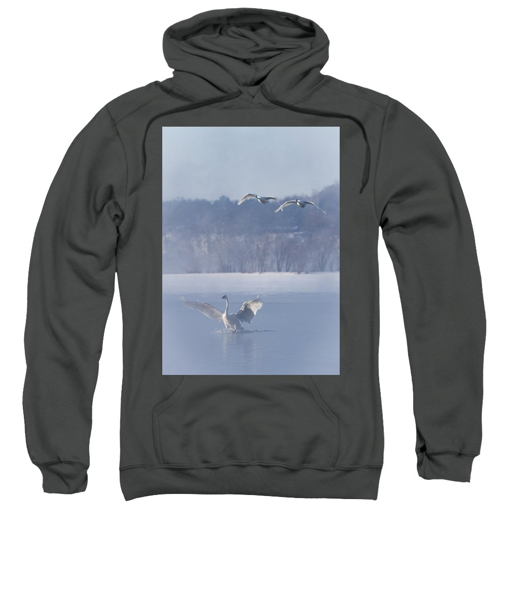 Swans Sweatshirt featuring the photograph Two Swans Landing by Patti Deters