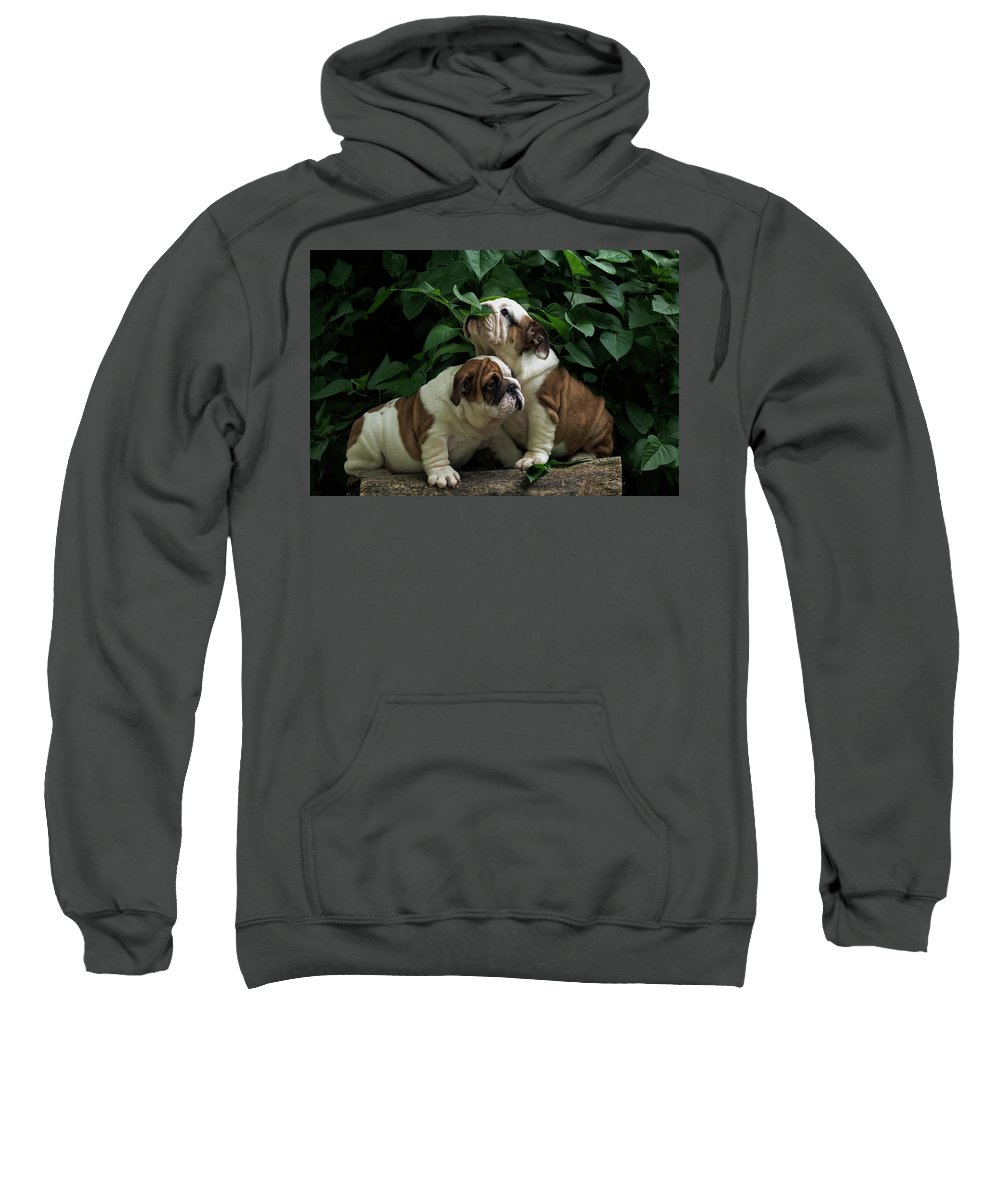 Sweet Couple By Irina Safonova Sweatshirt featuring the photograph Sweet Couple by Irina Safonova
