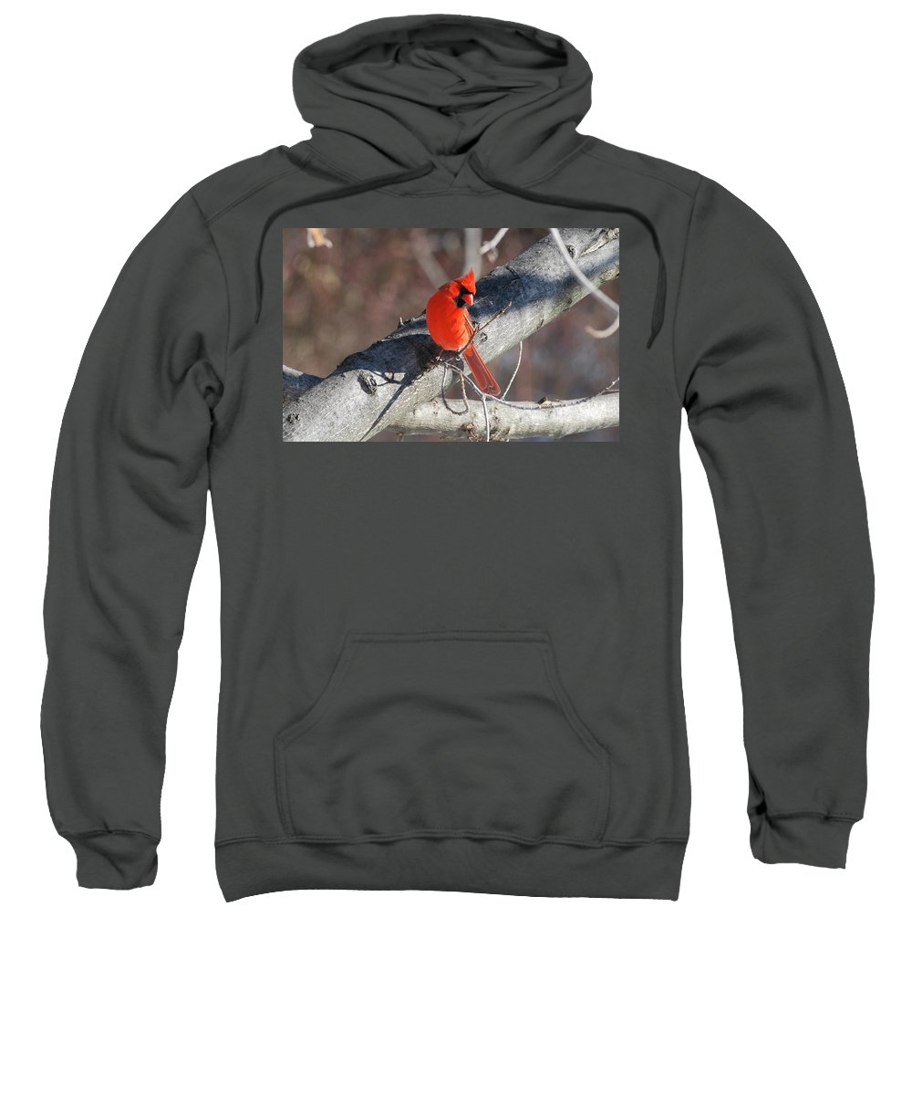 Cardinal Sweatshirt featuring the photograph Take My Picture by Lori Tambakis