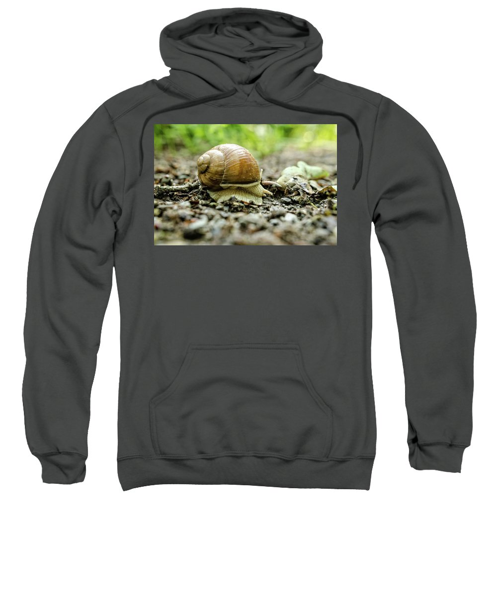 Winterpacht Sweatshirt featuring the photograph Taking A Rest by Miguel Winterpacht