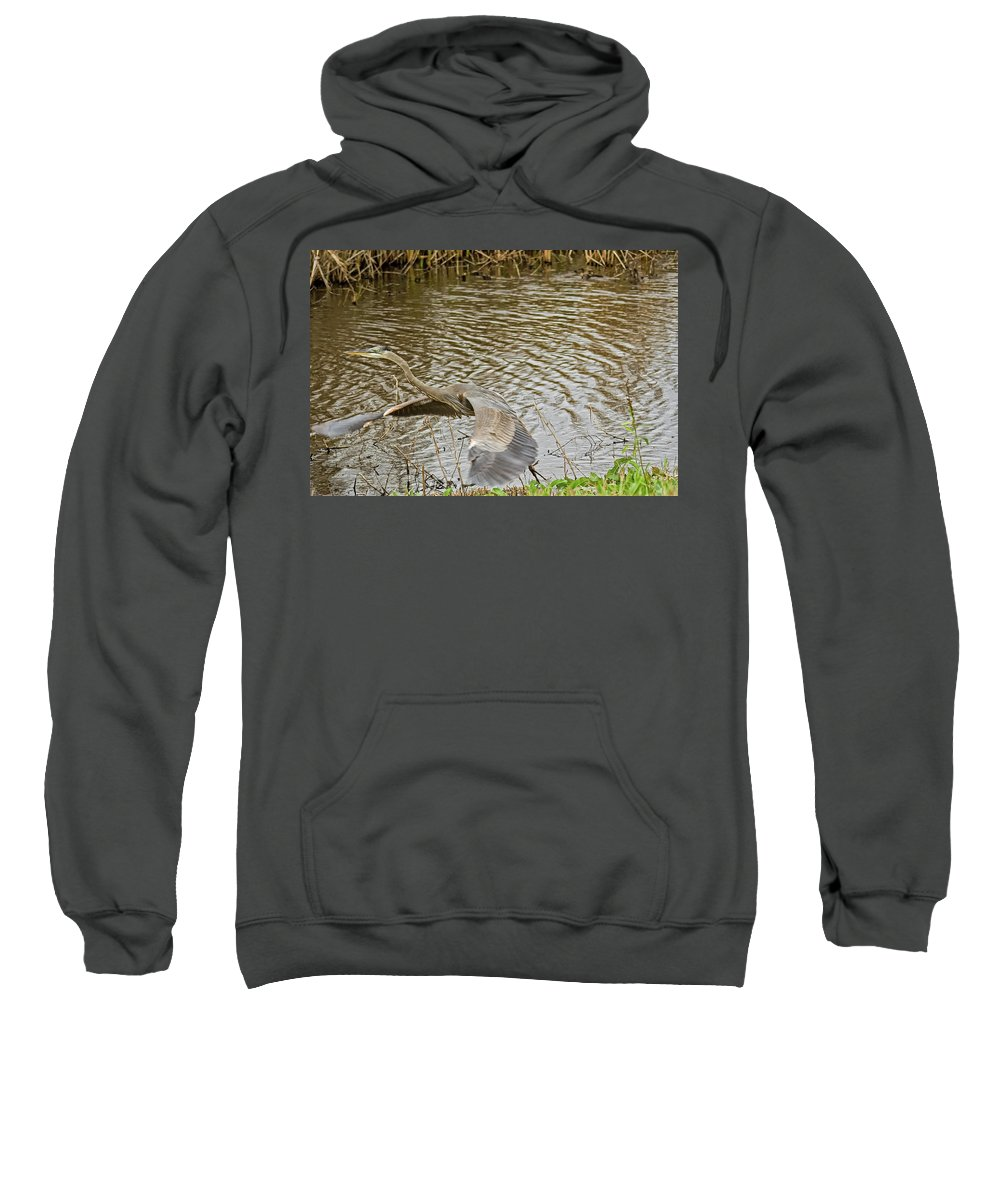 Great Blue Heron Sweatshirt featuring the photograph Taking Off by Robert Brown