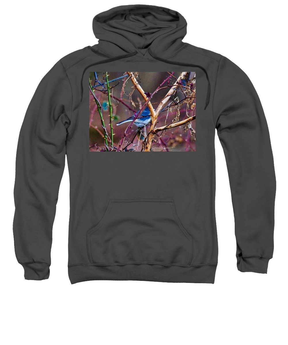 Bird Sweatshirt featuring the photograph The Blue Of Winter In The Woods by Shawn M Greener