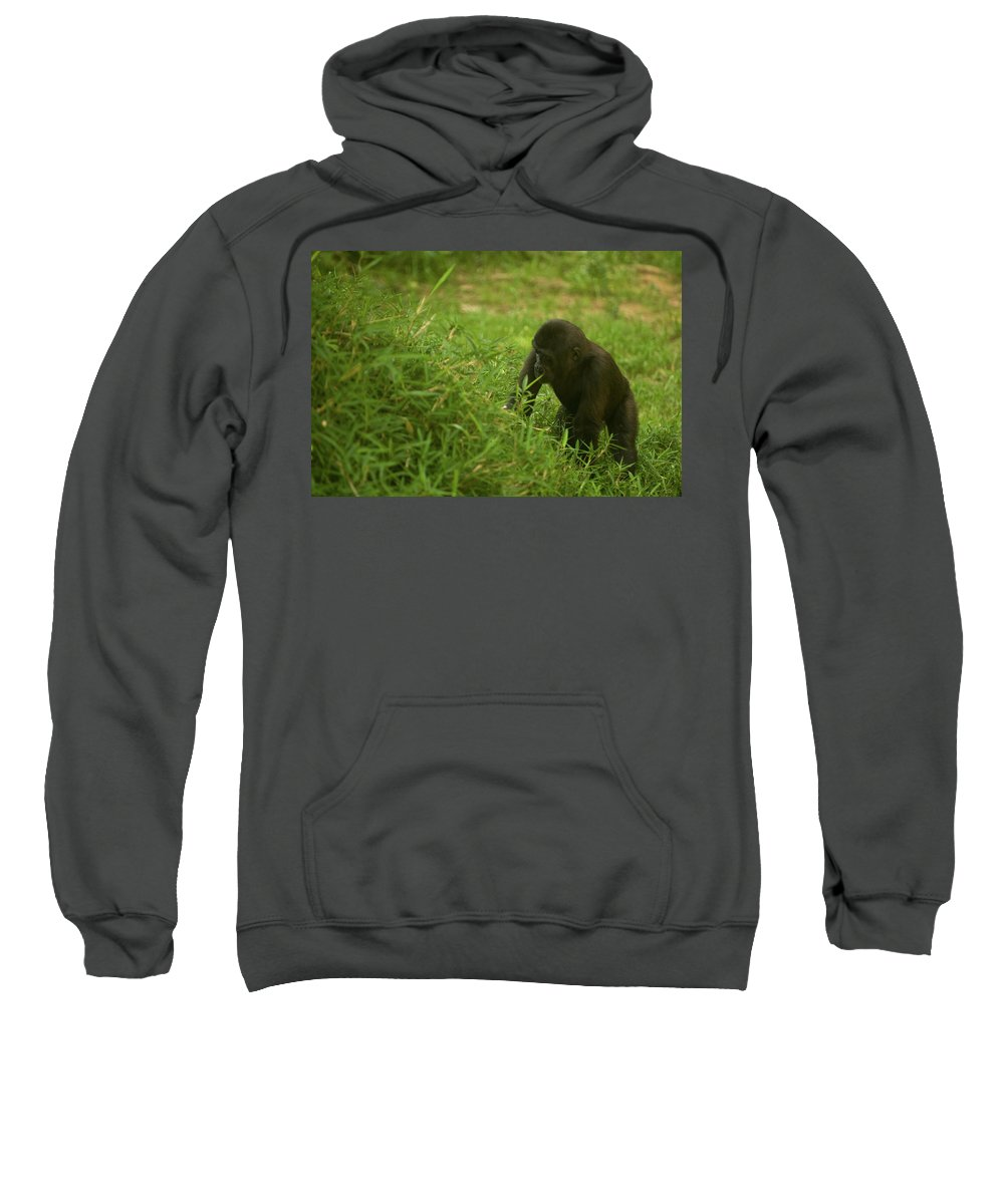 Kibibi Sweatshirt featuring the photograph The Climb by Paul Mangold