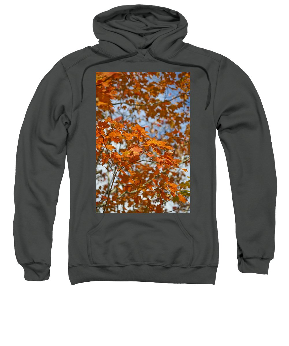 Fall Sweatshirt featuring the photograph The Color Of Fall 1 by Teresa Mucha