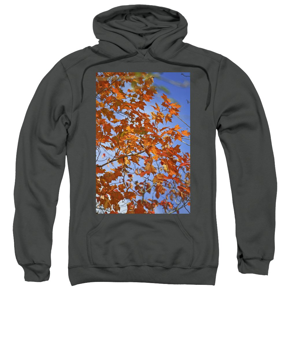 Fall Sweatshirt featuring the photograph The Color Of Fall 2 by Teresa Mucha