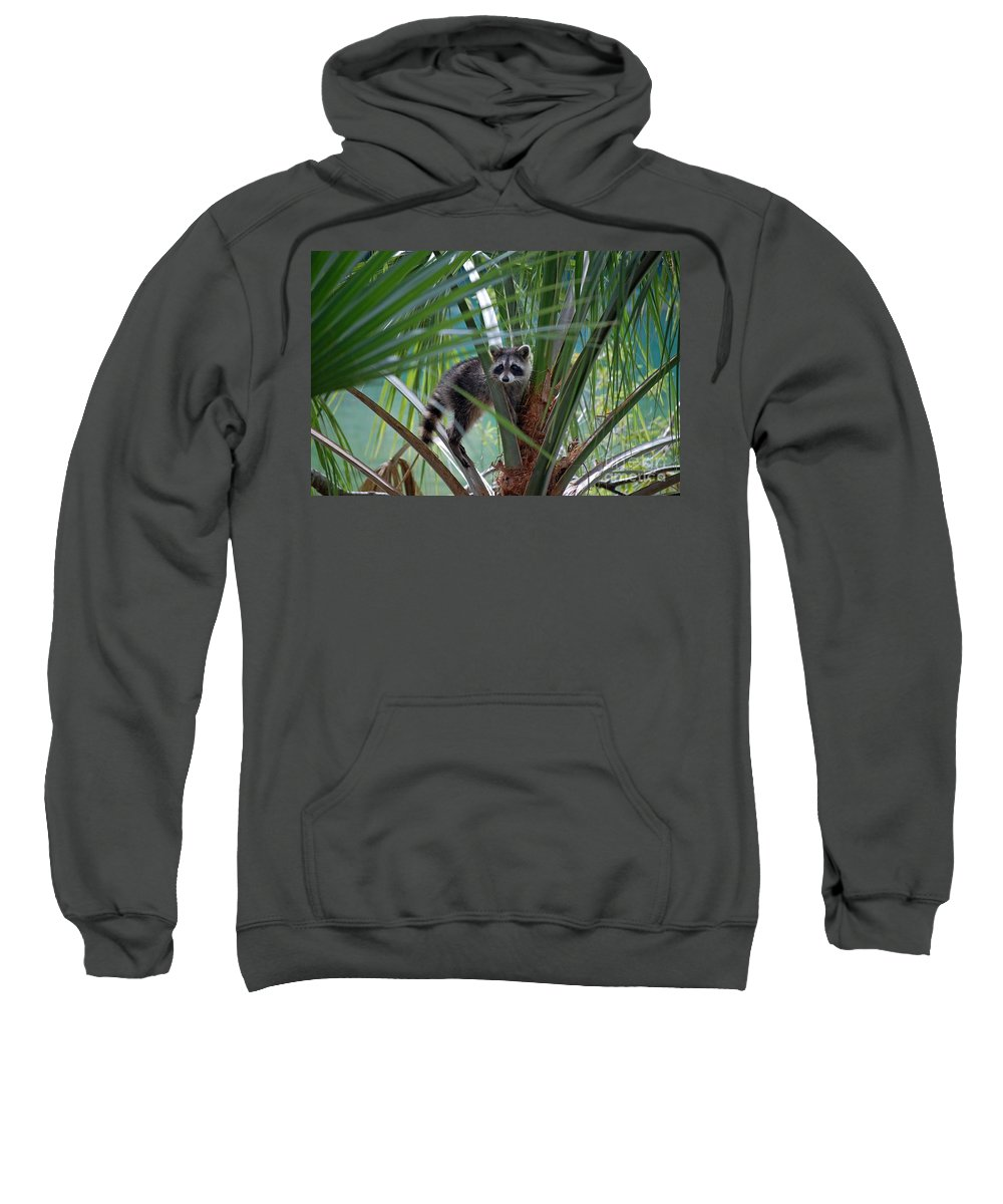 Genus Procyon Sweatshirt featuring the photograph The Explorer by Robert Meanor