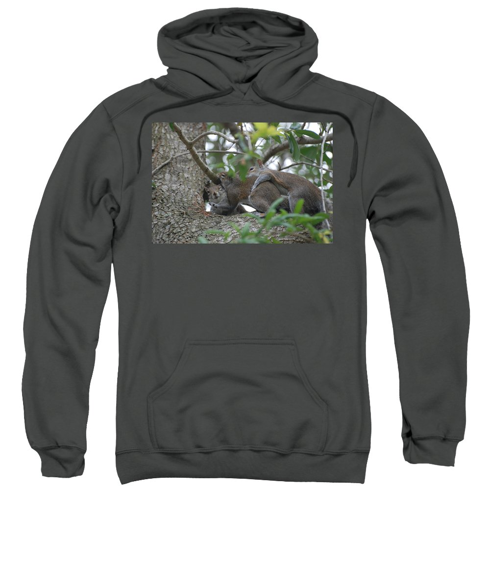 Squirrels Sweatshirt featuring the photograph The Fight For Life by Rob Hans