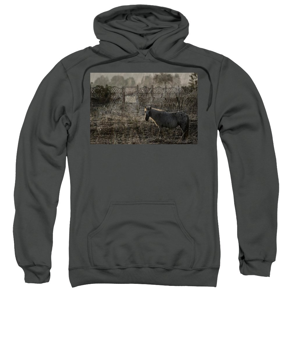 Pferd Sweatshirt featuring the photograph The Frosty Morning by Angel Tarantella