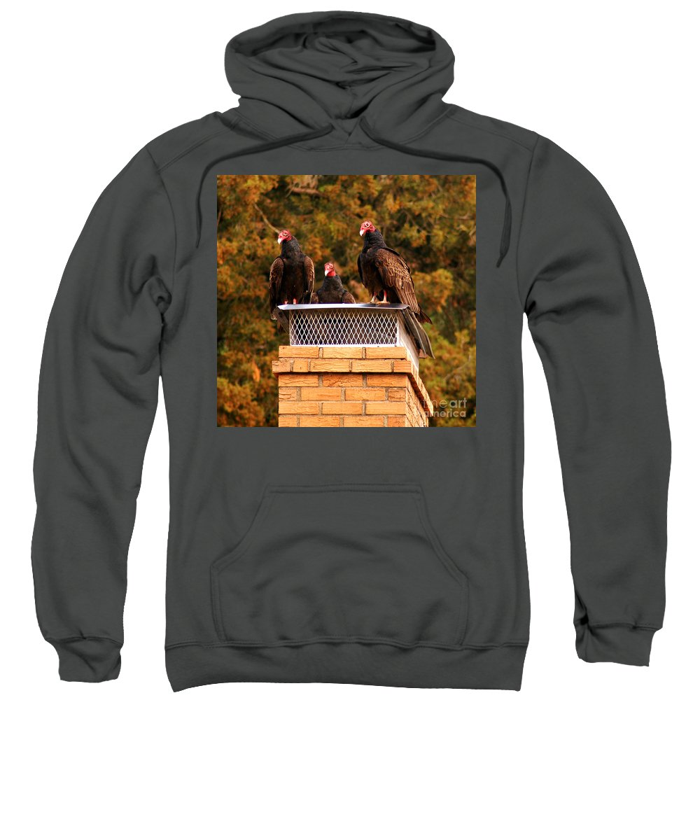 Clay Sweatshirt featuring the photograph The Gathering Of Vultures by Clayton Bruster