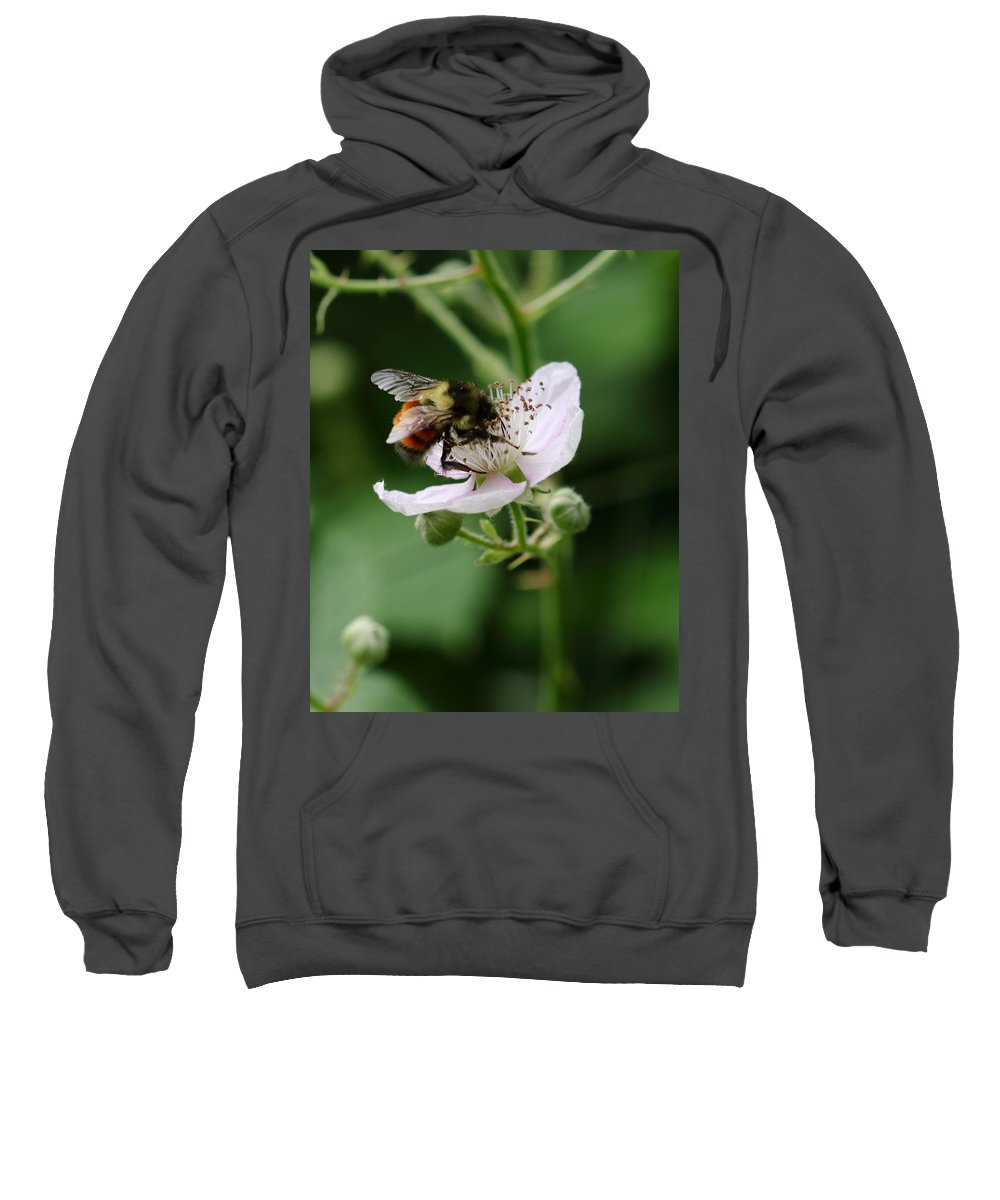 Honey Gatherer Sweatshirt featuring the photograph The Honey Gatherer by I'ina Van Lawick