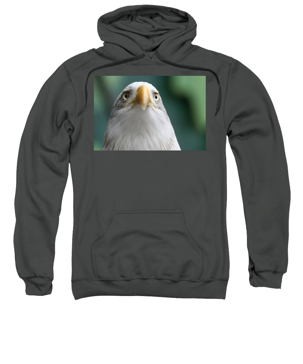 Eagle Sweatshirt featuring the photograph The Hunters Stare by Laddie Halupa