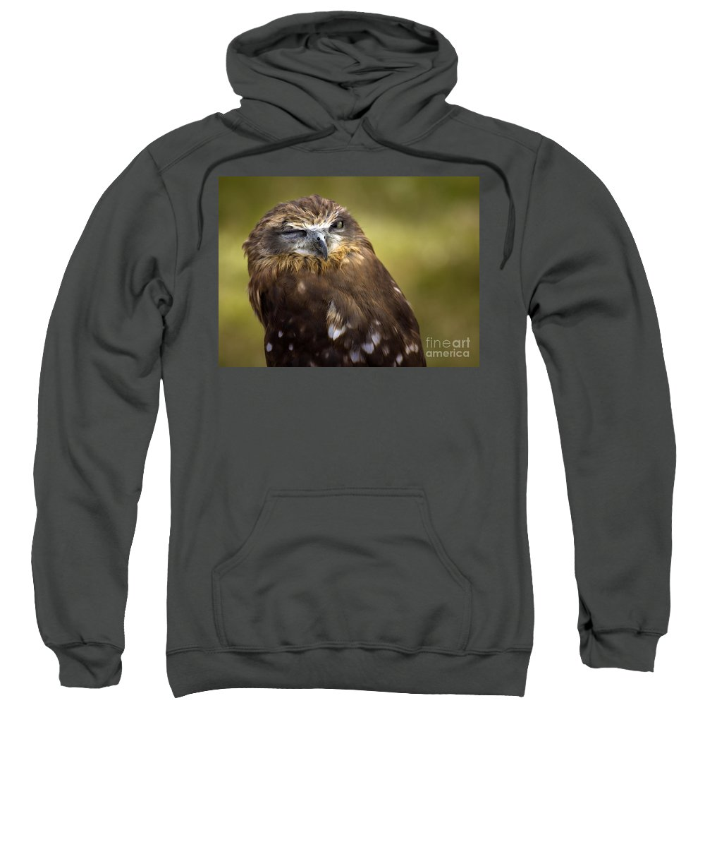 Owl Sweatshirt featuring the photograph The Little Owl by Angel Ciesniarska